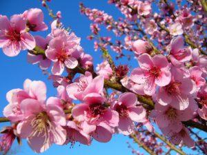 gazette, bio, nature, agroécologie, agrobiologie, jardin, jardinage, potager, printemps, conseil, conseils, avril