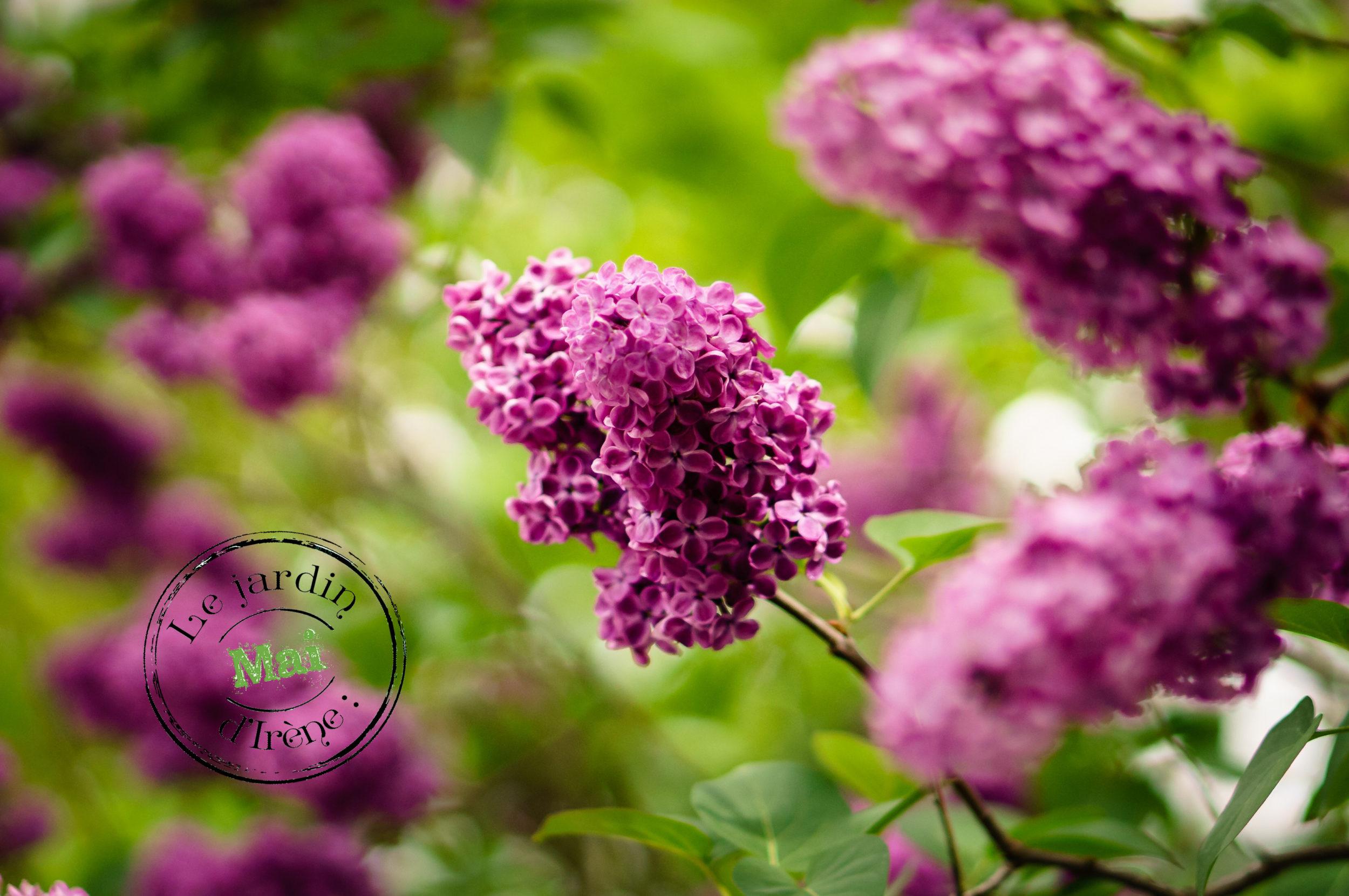 Le jardin d\'Irène en Mai - La Gazette Bio