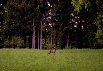 animaux, bio, chasse, chasseur, comment empecher la chasse, gazette bio, gibier, interdiction chasse, interdiction chasse à courre, interdire chasse, interdire chasse à courre, interdire chasse chez soi, interdire chasse sur ses terres, interdire chasse terrain privé, interdire chasseurs, nature
